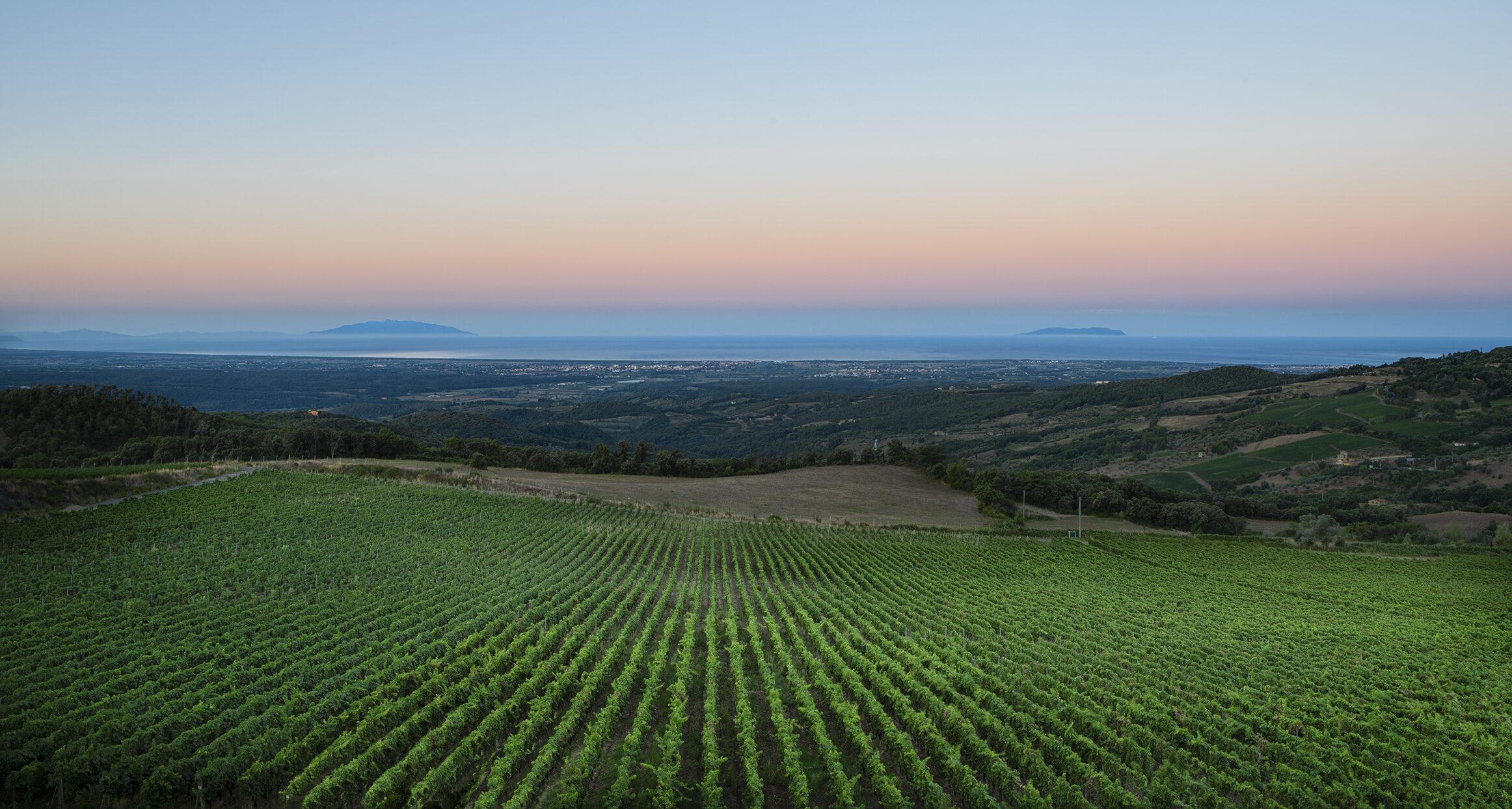 Tenuta Prima Pietra Vino Toscana Riparbella